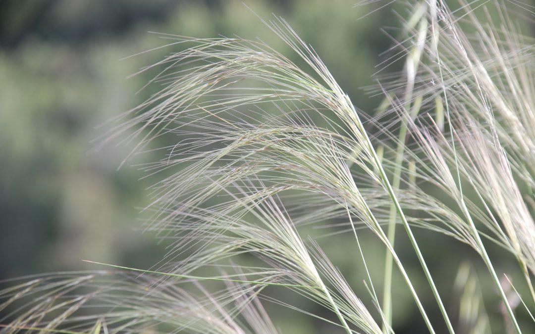 Mezcla de hierbas tranquilizante